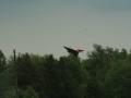 warbird2006_333.jpg